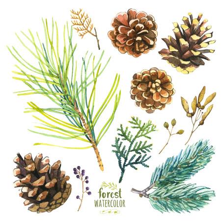 coniferous forest: Conjunto de ramificaciones del otoño de pino, abeto y árbol de la vida. Colección de herbario de las maderas.