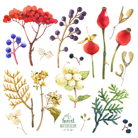 guelder rose: Set of winter and autumn forest plants. Collection of herbarium garden.