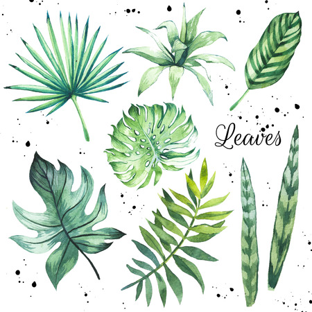 monstera leaf: Floral illustration. Handmade painting on a white background. Stock Photo