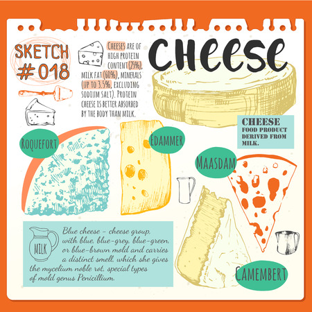 Bar of cheese. Vector illustration with sketch food. Fresh organic food.