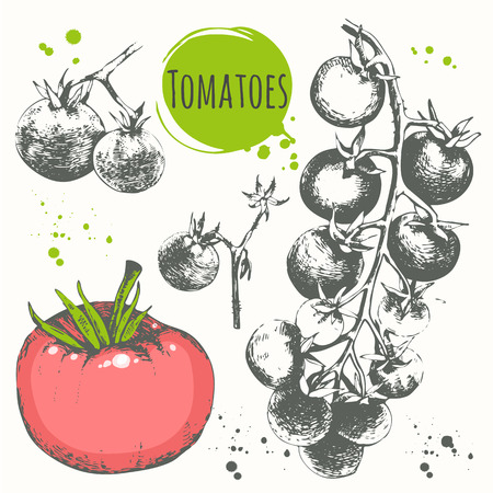 cherry tomatoes: Fresh organic food. Vector illustration with sketch vegetables. Black and white. Illustration