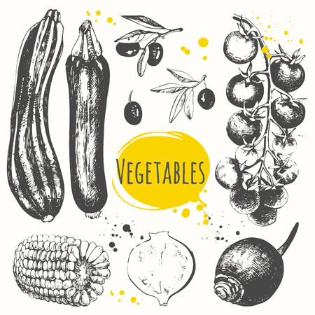 Set of hand drawn zucchini, corn, cherry tomatoes, olives, black radish. Fresh organic food. Black and white sketch of food.