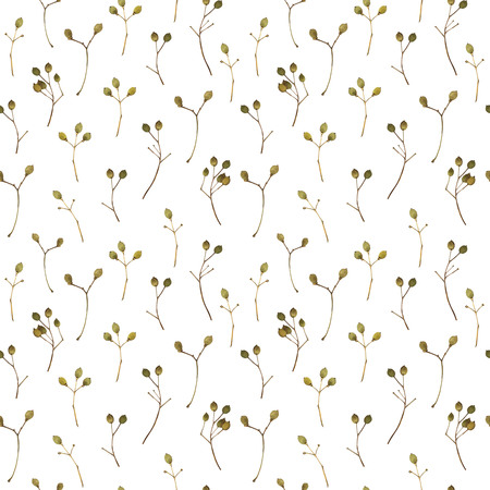 linden tree: Natural pattern on a white background. Watercolor realistic plants. Stock Photo