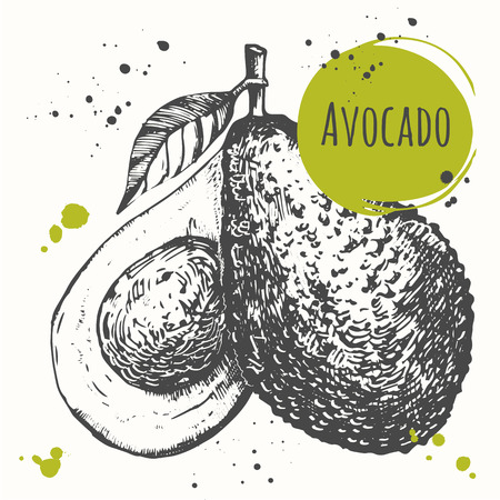 exotic fruit: Vector illustration with sketch fruit. Black and white.