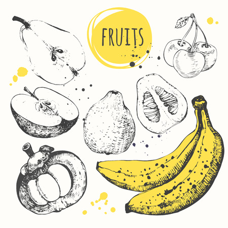 sketch drawing: Vector illustration with of sketch of fruit. Black and white. Illustration