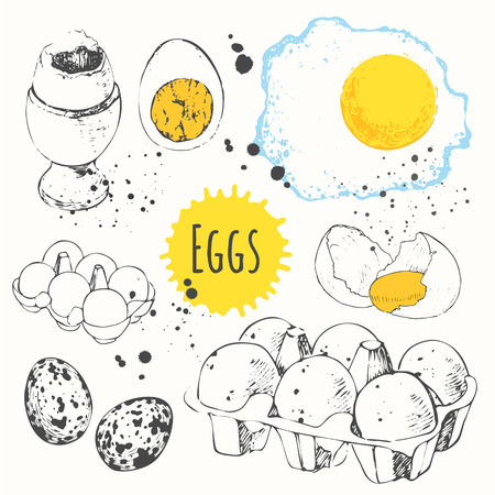 boiled: Fresh organic food. Vector illustration with sketch of fresh, boiled and fried eggs. Black and white. Illustration