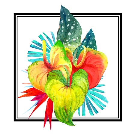anthurium: Beautiful pattern with begonia leaves, anthurium and strelitzia on a striped black and white background. Square frame. Hawaiian style.
