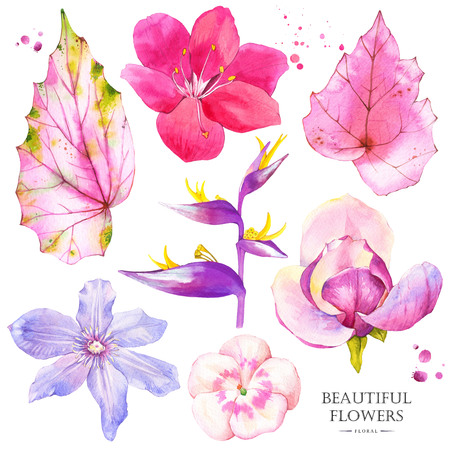 strelitzia: Watercolor collection of pink lily, magnolia, strelitzia, begonia, geranium and clematis. Handmade painting on a white background.