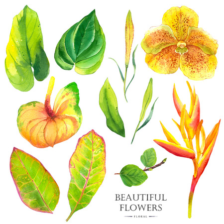 strelitzia: Watercolor set of green leaves begonia, anthurium, strelitzia and orchid. Handmade painting on a white background. Stock Photo