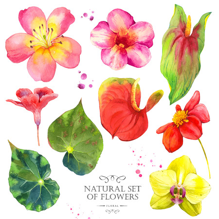 anthurium: Watercolor collection of orchid, dahlia, anthurium, orchid and lily. Handmade painting on a white background. Stock Photo