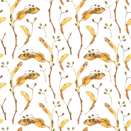 linden: Nature pattern on a white background. Watercolor realistic plants.