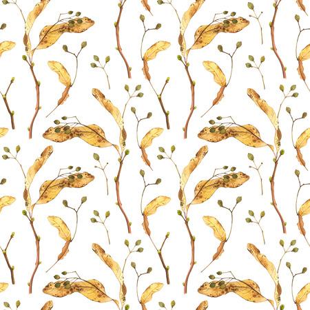 tilo: patrón de la naturaleza sobre un fondo blanco. Acuarela plantas realistas. Foto de archivo