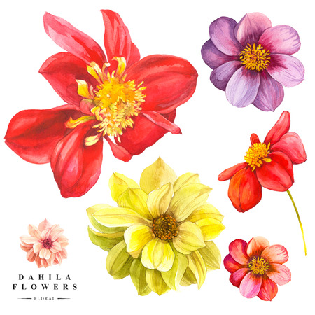 Watercolor collection of red and yellow dahlia flowers. Handmade painting on a white background. Archivio Fotografico