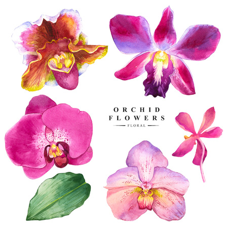 illustration: Botanical illustration with realistic tropical flowers and leaves. Watercolor collection of orchid flowers. Handmade painting on a white background. Spa style. Violet flowers.