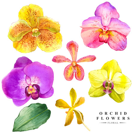 Watercolor collection of orchid flowers. Handmade painting on a white background. Spa flowers.