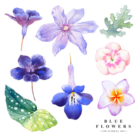 plant design: Watercolor collection of blue flowers, plumeria, clematis. Handmade painting on a white background. Blue set.