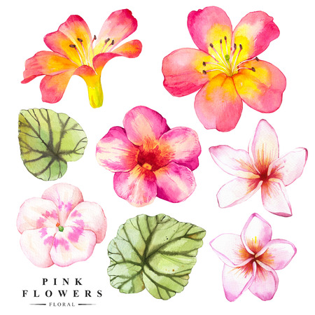 Watercolor collection of green begonia leaves, plumeria and lily. Handmade painting on a white background.
