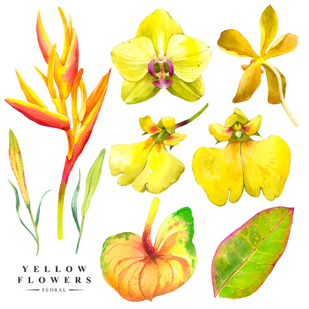 strelitzia: Watercolor collection of orchid flowers, anthurium and strelitzia. Handmade painting on a white background. Yellow set. Stock Photo