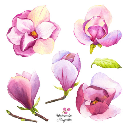 Set of spring pink flowers. Collection of watercolor realistic flowers on white background for your design and decor.