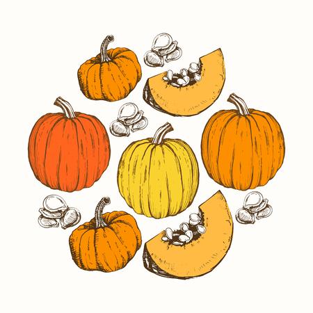 autumn harvest: Sketches of orange pumpkins. Vector illustration of the autumn harvest. Thanksgiving Day. Round composition