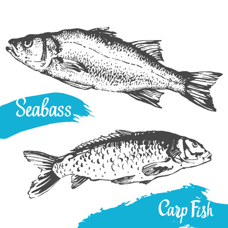 carp fish: Hand drawn vector illustration with seabass and carp fish. Market. Seafood menu. Brush calligraphy elements for your design. Handwritten ink lettering.