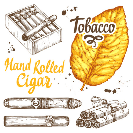 cuban cigar: Vector illustration with classical smokeking set. Bunch of tobacco and box hand rolled cigars, leaf in sketch style. Best cuban quality. Illustration