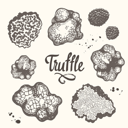 Vector illustration with set of mushrooms in sketch style. Hand-drawn truffle on white background. Delicatessen French mushrooms. Autumn forest harvest. Vettoriali