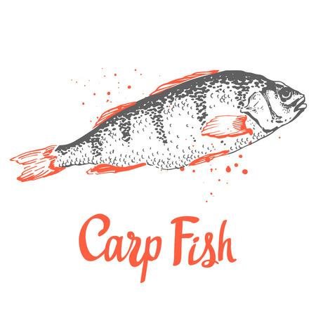 ink sketch: Hand drawn vector illustration with sketch carp. Fish Market. Seafood menu. Brush design elements. Handwritten ink lettering.