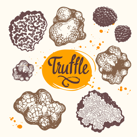 Vector illustration with set of mushrooms in sketch style. Hand-drawn truffle on white background. French delicatessen. Autumn forest harvest.