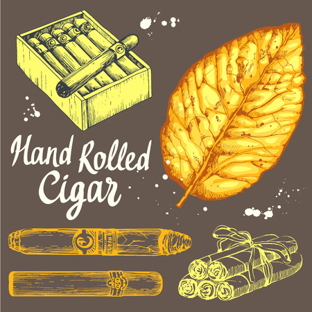 cuban cigar: Vector illustration with classical smokeking set. Bunch of tobacco box, hand rolled cigars, leaf in sketch style. Best cuban quality.