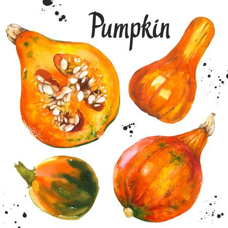 Watercolor vegetables. Fresh farm food. Set of different kinds of pumpkins. Simple painting sketch. Orange set.