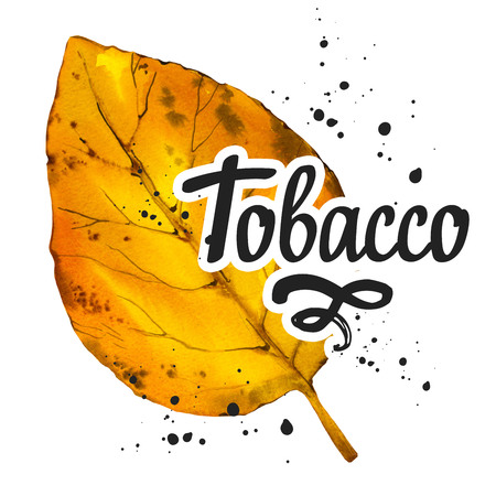 Watercolor illustration with tobacco yellow dried leaf in sketch style. Old classical tradition of smoking tobacco. Lettering design.