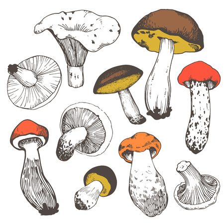 Vector illustration with set of mushrooms in sketch style. Hand-drawn milk caps, chanterelle, slippery jack, morel and gyromitra on white background. Autumn forest harvest.