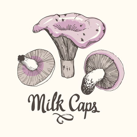 Vector illustration with mushrooms in sketch style. Hand-drawn milk caps on white background. Autumn forest harvest.