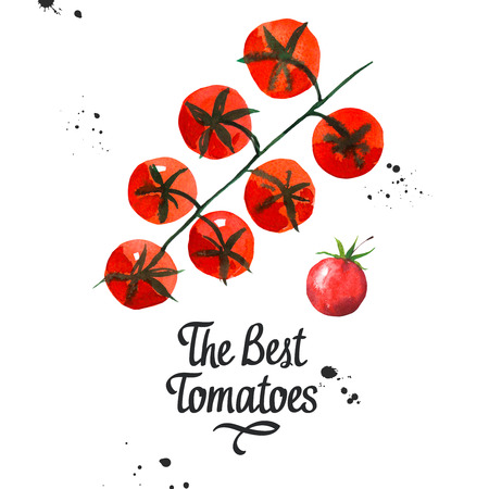 peasant: Branch with cherry tomatoes. Watercolor vegetables illustrations. Fresh organic food. Simple painting sketch. Stock Photo