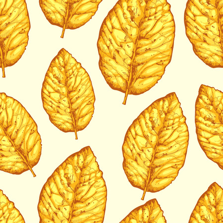 Seamless pattern with dried yellow leaves on white background. Vector illustration of tobacco. Stok Fotoğraf - 86094513