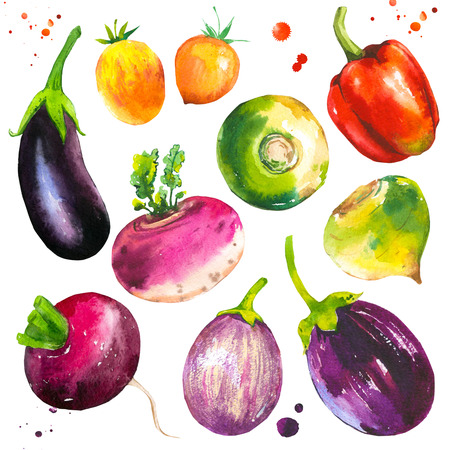 Watercolor illustration with farm grown illustrations. Vegetables set: pepper, tomato, turnip, radish, eggplant. Fresh organic food.