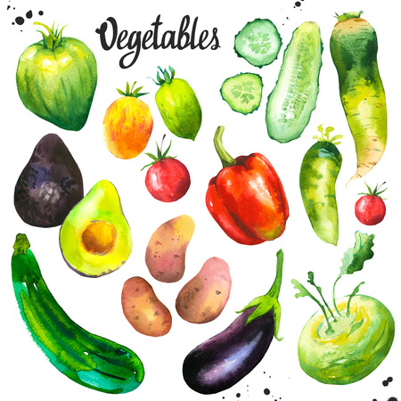 Watercolor illustration with farm grown illustrations. Vegetables set: tomato, eggplant, cucumber, zucchini, peppers, avocado, cauliflower, potatoes, turnips. Fresh organic food.