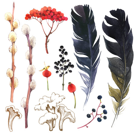Watercolor illustration with branches, leaves and berries. Set of winter and autumn forest plants and feathers. Collection of herbarium garden. Willow, viburnum, illustration.