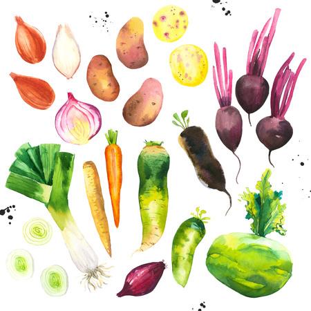Watercolor illustration with farm grown illustrations. Vegetables set: potatoes, onions, beets, leeks, carrots, cucumber. Fresh organic food. Stock Photo