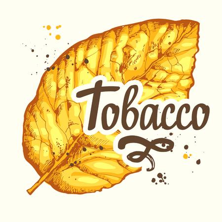 Illustrazione vettoriale con foglia secca giallo tabacco nello stile di abbozzo. Vecchia tradizione classica del fumo. Progettazione di lettere.