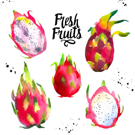 Watercolor exotic fruits. Fresh farm food. Set of different dragon fruit. Simple painting sketch. Violet set. Pitahaya.