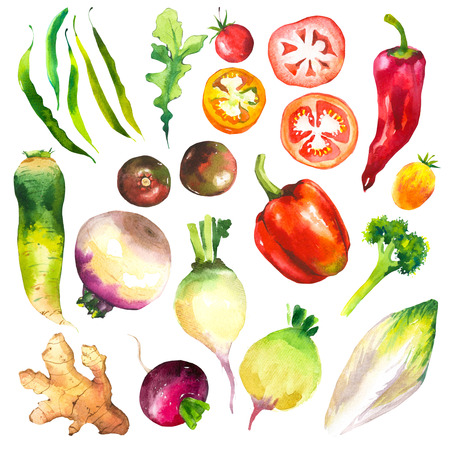 Watercolor illustration with farm grown illustrations. Vegetables set: tomatoes, peppers, turnips, chicory, pepper, arugula, ginger, broccoli. Fresh organic food.