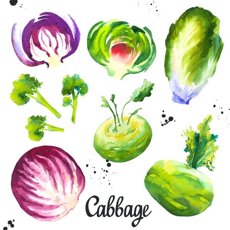 Watercolor illustration with farm grown illustrations. Vegetables set: cabbage, cauliflower, broccoli, cabbage, artichoke. Fresh organic food.