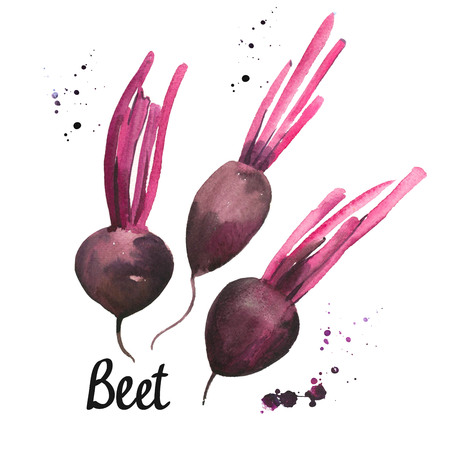 Watercolor beets. Provencal style. Simple painting sketch of organic food. Fresh vegetables.
