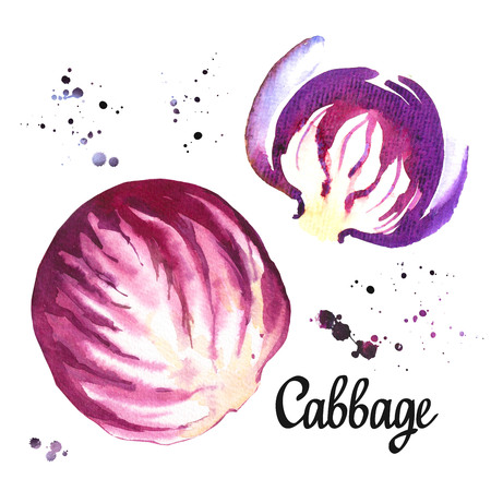 Watercolor purple cabbage. Provencal style. Simple painting sketch of organic food. Veggie menu. Standard-Bild - 98856676