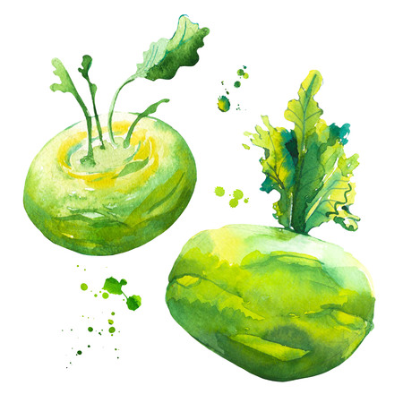 Watercolor green kohlrabi cabbage. Provencal style. Simple painting sketch of organic food. Veggie menu. Stok Fotoğraf
