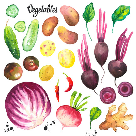 Watercolor illustration with farm grown illustrations. Vegetables set: turnip, radish, tomato, cabbage, ginger, potato, cucumber, spinach, peppers. Fresh organic food. 写真素材