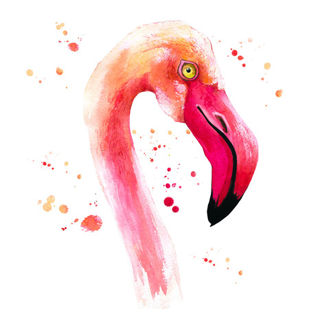 Watercolor illustration with pink flamingo. Tropical bird. Paradise.