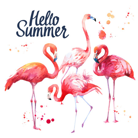 Watercolor illustration with pink flamingoon white background. Tropical bird. Paradise. Stock Photo